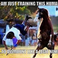 Just training this human to dismount like a ninja