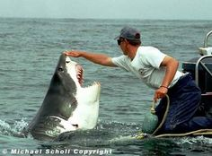 Apparently this man saved this shark from a fishing net and ever since the shark will follow his boat around. A shark love story! Is it crazy that I wish this was my story to lol