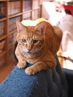 祝・不思議な生き物トライアル決定(溝の口・猫式)の画像 | マロンの物語 feat.猫カフェ Cats