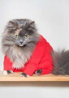 Ooohoho! My kitty soo needs these PJs so he can match Tlyer in his red onsie!  Purr Your Heart Into It Cat Pajamas, #ModCloth