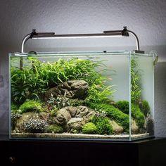 10 Tips on Designing a Freshwater Nature Aquarium Aquascaping, Aquarium Aquascape, Planted Aquarium, Aquarium Landscape, Nature Aquarium, Aquarium Fish Tank, Fish Tanks, Aquarium Design, Terrariums