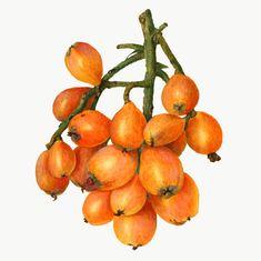 Apple Illustration, Orange Fruit, Green Grapes, Free Illustrations, Vintage Yellow, Vintage Japanese, Vintage Images, Agriculture, Free Images