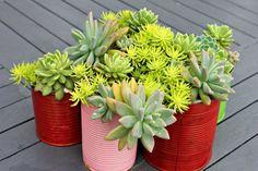 DIY déco avec des plantes succulentes en 80 photos fascinantes!
