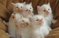 So cutes.....))))))
