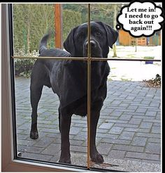 BOL #Labrador