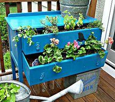plants in a dresser