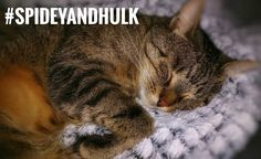 Love a good read? Grab your cuppa for this one. ☕️ Kuschelkatze https://felixbcats.wordpress.com/2017/07/15/kuschelkatze/?utm_campaign=crowdfire&utm_content=crowdfire&utm_medium=social&utm_source=pinterest