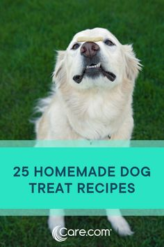25 Homemade Dog Treat Recipes Your Pet Will Love Diy Dog Treats, Homemade Dog Treats, Dog Treat Recipes, Dog Food Recipes, Dog Obedience Classes, Dog Friendly Hotels, Dog Training Techniques, Dog Insurance, Can Dogs Eat