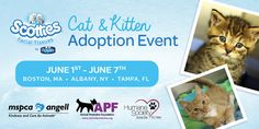 Check out the Cat & Kitten Adoption Event with Scotties + Care Pack & $25 Amazon Giveaway