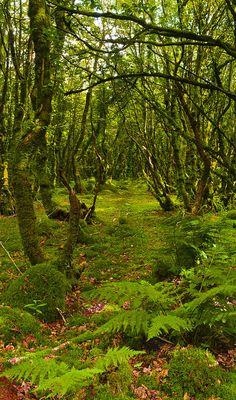 Une allée de mousse dans la forêt près de Locronan dans le Finistère.