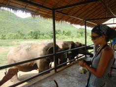 Elephant´s World #Kanchanaburi #Thailand Attraction, Thailand, Elephant, Horses, World, Animals, Thailand Travel, Animales, Animaux