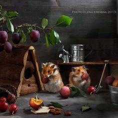 harvest by Elena Eremina on 500px