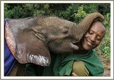 Lempaute kisses Amos for ! All About Elephants, Baby Elephants, Save The Elephants, Elephant Love, Baby Animals, Cute Animals, Wild Animals, Tiger Cubs, Tiger Tiger