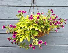 Hanging basket  Flowers Susan's Flower arrangement, Susan's garden, succulents, hanging flowers, flower, arrangement, murphyfrog, repurpose, container gardening, colorful bloom