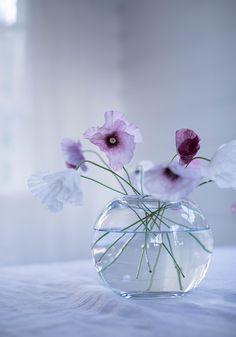 Tulips Flowers, Simple Flowers, My Flower, Flower Vases, Flower Power, Beautiful Flowers, Poppies, Purple Flowers Wallpaper, Good Morning Flowers