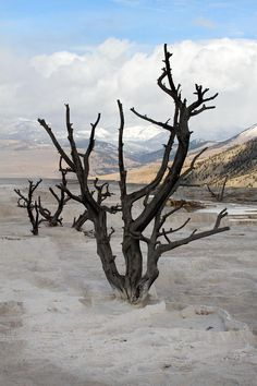✮ Mammoth hot springs in Yellowstone National Park