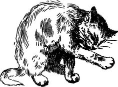 'If the cat looks at you after washing his face it is said you will die before the end of the year.' #FolkloreThursday In Donegal #Gaeilge the word fórcan describes this https://www.duchas.ie/en/cbes/4922041/4921371/4953266 …