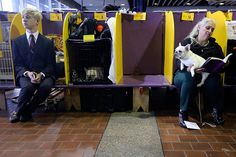 Westminster Dog Show: Handlers sit in the benching area with their dogs before competing