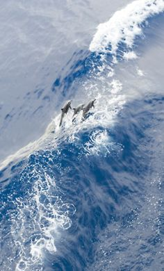 Dolphins in a huge wave                  (via U.S. Pacific Fleet)  :)