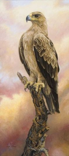 Bilodeau, Lucie (b,1967)- Tawny Eagle