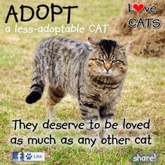 """Special-needs pets are just as wonderful and loving as """"normal"""" pets, and they're just as deserving of forever homes.  www.petfinder.com/promotions/less-adoptable-pet-week"""