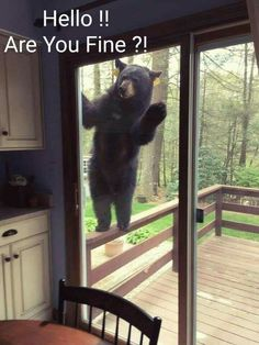 Funny pictures of the day. Check these latest extremely funny pictures compilation that will make you laugh out loud. Real Estate Quotes, Real Estate Humor, Funny Animal Pictures, Funny Animals, Adorable Animals, Mal Humor, Funny Memes, Jokes, Hilarious Quotes