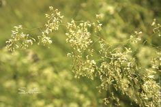 """Купить Фотокартина """"Травы"""" - фотокартина, природа, пейзаж, фотокартина для интерьера, фотокартина авторская, Фотокартина природа"""