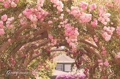 The Rose Arbour.  By georgianna lane  http://www.flickr.com/photos/georgiannalane/4935940050/