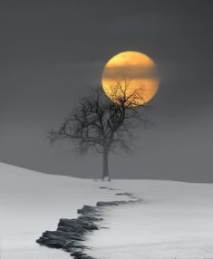 99 Charming Moonlight Photography Ideas and Tips Landscape Art, Landscape Photography, Nature Photography, Travel Photography, Photography Lighting, Photography Hacks, Photography Courses, Photography Magazine, Landscape Paintings