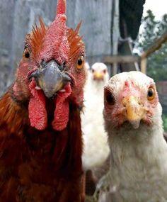speed dating rooster tænder zurich expat dating
