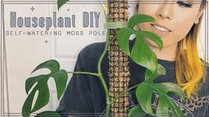 Moss Plant, Grow Together, Self Watering, Indoor Plants, House Plants, The Creator, Youtube, Diy, Waiting