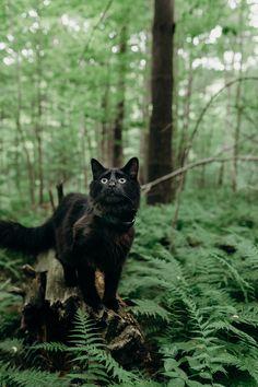 Black cat amongst the ferns...