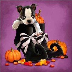 Check out the deal on Cazenave Puppy Halloween Ceramic Accent & Decor Tile - MC2-005c at Artwork On Tile Online Storefront