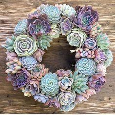🌺🌸💗🌵 This beauty is off to LA ✈️📦 Succulent Arrangements, Cacti And Succulents, Cactus Plants, Succulent Gardening, Succulent Terrarium, Indoor Gardening, Exotic Flowers, Beautiful Flowers, Succulent Wreath
