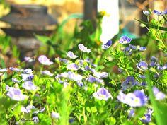 Blue Flower Patch. PolkaSpot Homestead. 2013.