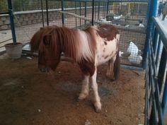 Pony ???