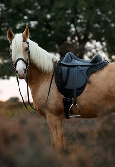 Beautiful treeless saddle to create more comfort for your horse. Horse Saddles, Horse Tack, Palomino, Treeless Saddle, All About Horses, Cute Horses, Barefoot, Westerns, Cute Animals
