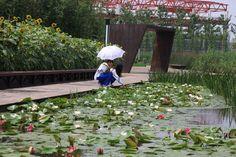 Shanghai Houtan Park by Turenscape
