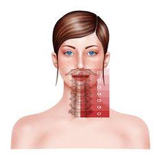SketchBook. Textile Design, Illustration, Sport mode: Cervical vertebra medical illustration