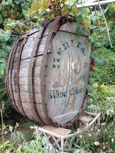 Vineyard - Wijngaard