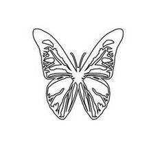 butterfly line drawings