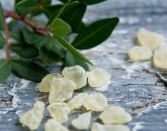 Mastic Gum Mastiha Masticha Large Fresh Natural Tears of Greek Chios Island Mastic Tree, Mastic Gum, Chios Greece, The Kitchen Food Network, Simple Minds, Chewing Gum, Greek Recipes, Sugar And Spice, Food Network Recipes