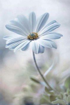 Blue spring images