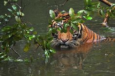 in the water by Syahrul Ramadan on 500px