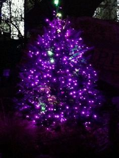 78 Best Purple Christmas Tree Lights