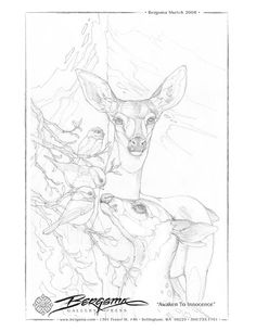 Jody Bergsma deer coloring pages Deer Coloring Pages, Adult Coloring Pages, Coloring Books, Drawing Sheet, Line Drawing, Drawing Sketches, Animal Drawings, Art Drawings, Pyrography Patterns