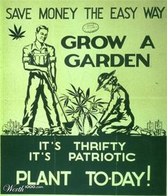 fun cannabis pictures - Google Search
