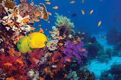 Aquatic life-Google Images