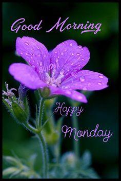 Good Morning Nature, Good Morning Good Night, Morning Wish, Beautiful Morning, Good Morning Images, Good Morning Quotes, Good Night I Love You, Quotes About God, Happy Monday