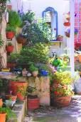 potted garden - Google Search